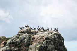 41 cormorants cabot trail cape breton nova scotia