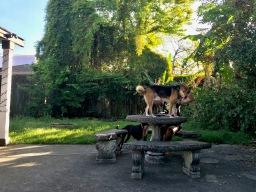 quarantine week 2 - 2 courtyard dogs