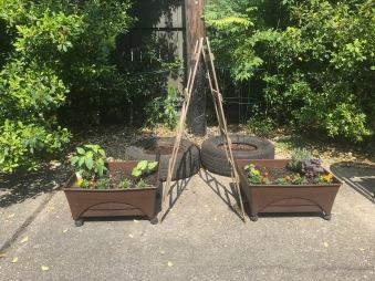 quarantine week 2 - 22 garden