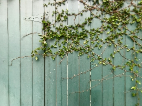 quarantine week 3 - 35 laurel st greenery