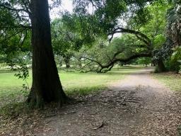 quarantine week 3 - 40 audubon park