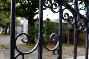 quarantine week 4 - 50 looking in lafayette cemetery 1