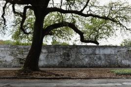 quarantine week 4 - 54 cemetery + oak