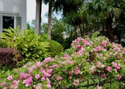 quarantine week 4 - 66 garden district flowers