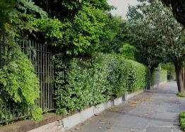 quarantine week 4 - 69 garden district jasmine