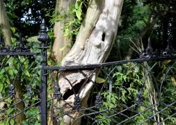 quarantine week 4 - 71 tree v chain link fence