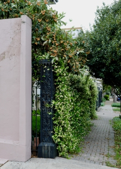 quarantine week 4 - 94 garden district satsumas + jasmine