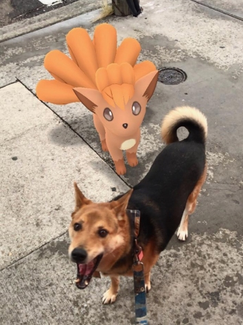 31 french quarter quarantine empty city ollie vulpix