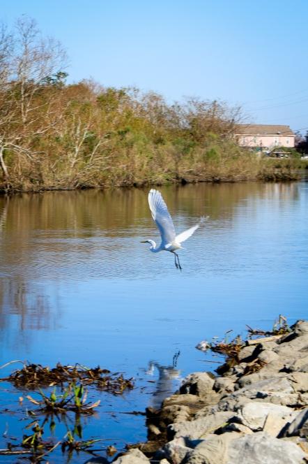 07-crane-in-flight-on-the-bayou
