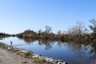 08-ducks-on-the-bayou