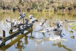 28-shell-beach-pelican-chaos